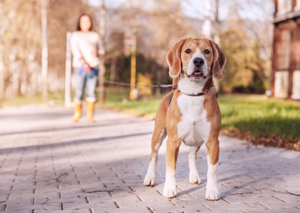 Estados Unidos celebró el día nacional del perro