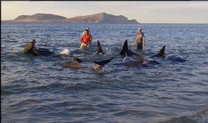 Hallan 27 ballenas varadas en Baja California