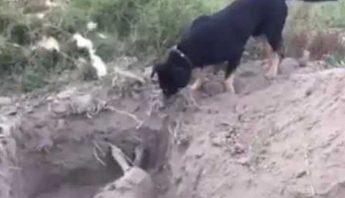 El video fue compartido por el dueño de ambos animales.