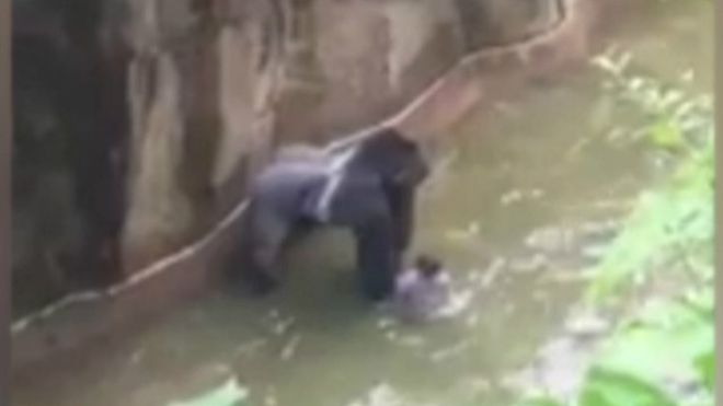 Madre del niño que cayó en la jaula del gorila se libra de cargos