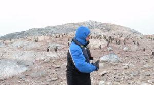 Los pingüinos odian la ópera; este video lo prueba
