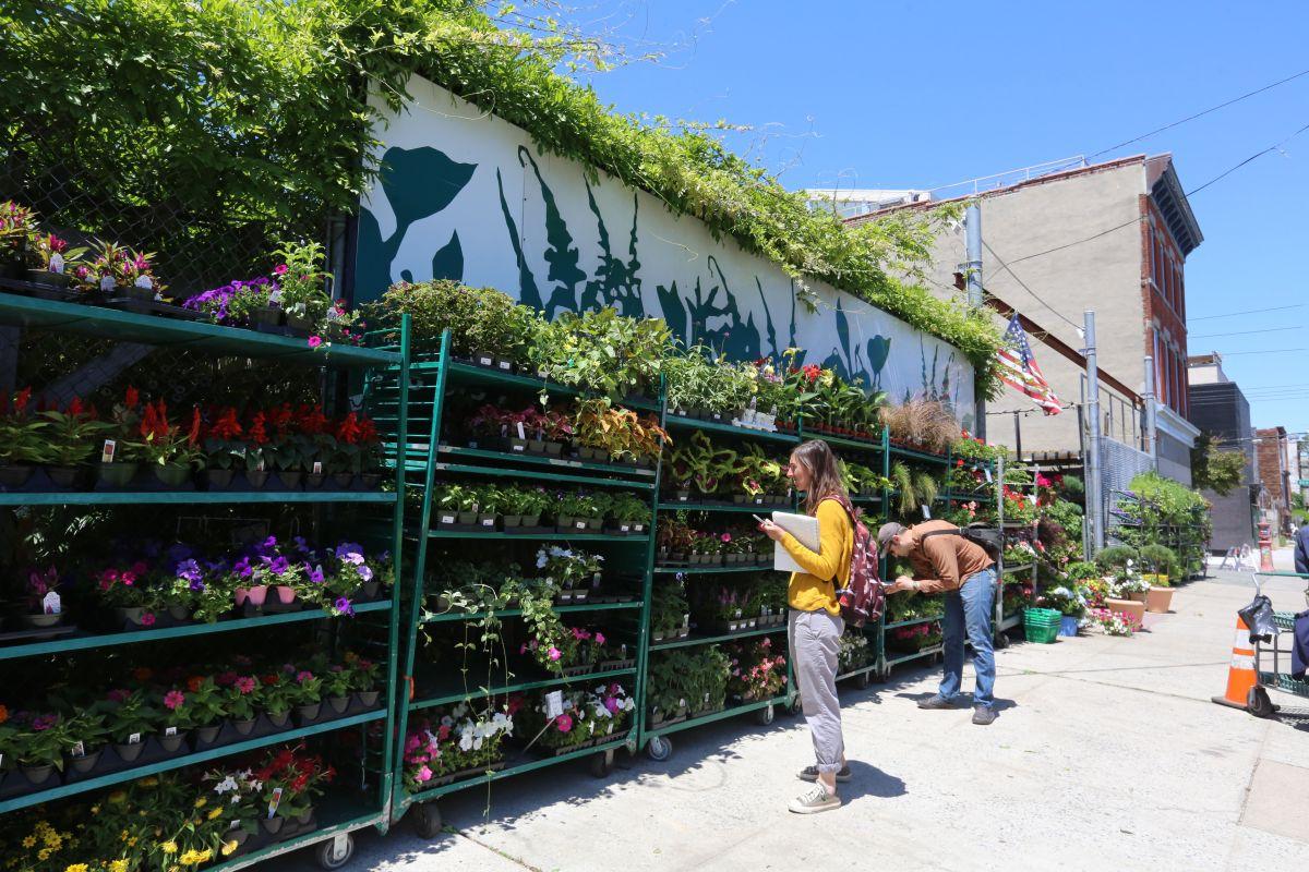 Un invernadero, floristería y jardín tiñe de verde la calle Van Brunt, en el número 444.
