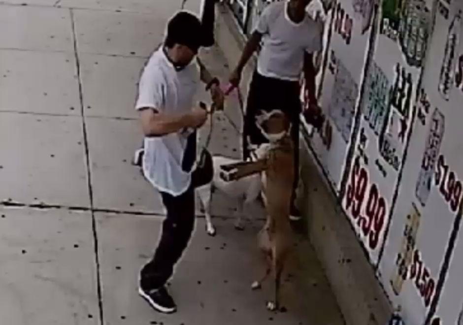 Pandillero de Latin Kings aparece en video agrediendo brutalmente a perro
