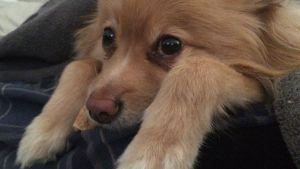 Congresistas promueven resolución en contra de consumo de perros en China