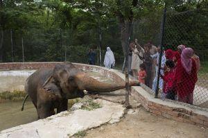 Video y fotos: Kaavan, el elefante deprimido que tiene una vida miserable