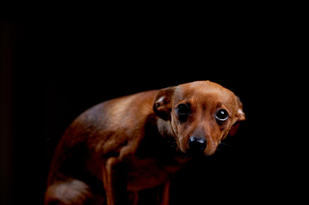 John Lowery fue arrestado en Long Island por tener 27 perros viviendo en malas condiciones