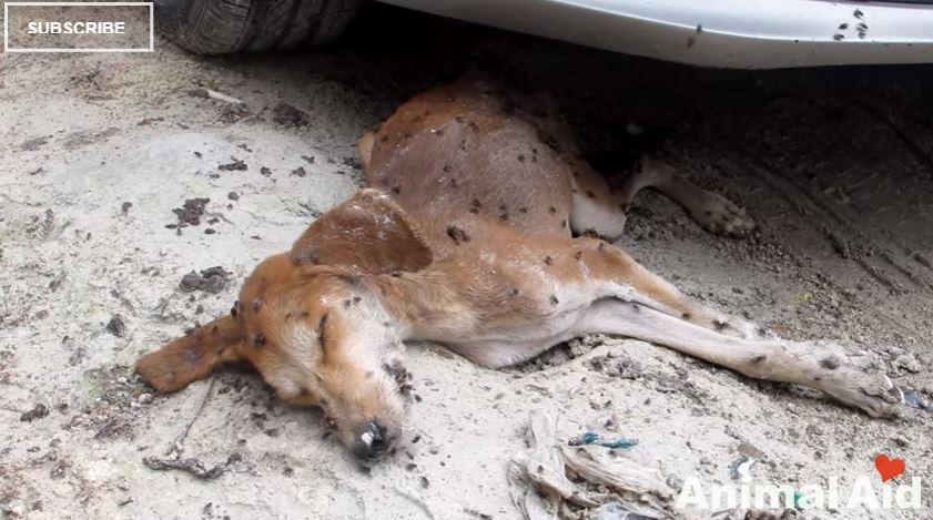 Video: El final que tuvo este perro moribundo te sorprenderá