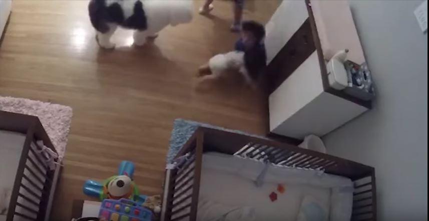 Video: El niño de 9 años que salvó a su hermanito bebé de una trágica caída