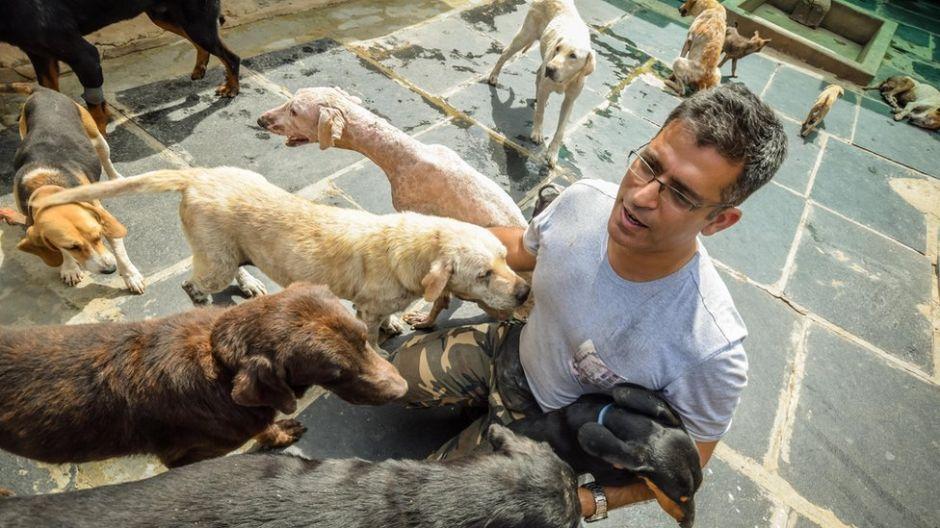 El ingeniero que destina su fortuna a cuidar 735 perros abandonados