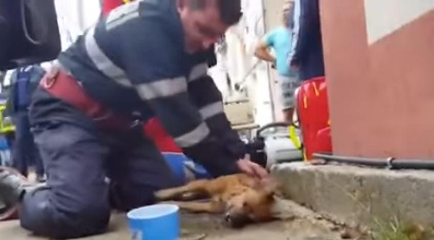 """Video: Bombero da respiración """"de boca a boca"""" a un perro para salvarle la vida"""