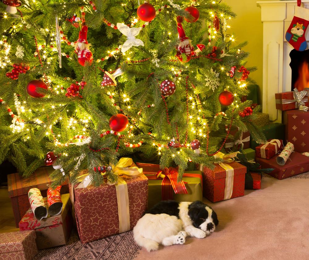 Lo de poner regalos debajo del arbolito vino mucho después.