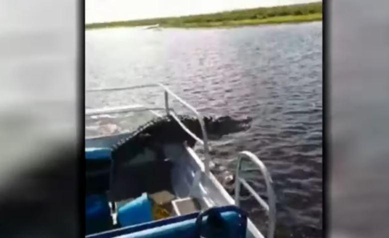Video: Transmitía por Facebook Live cuando un cocodrilo saltó a su barco