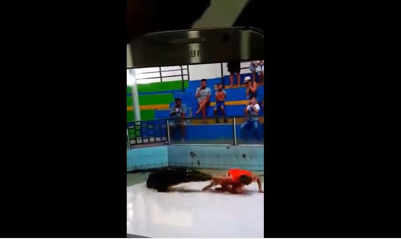 Video: De milagro este cocodrilo no le arrancó el brazo a su entrenador
