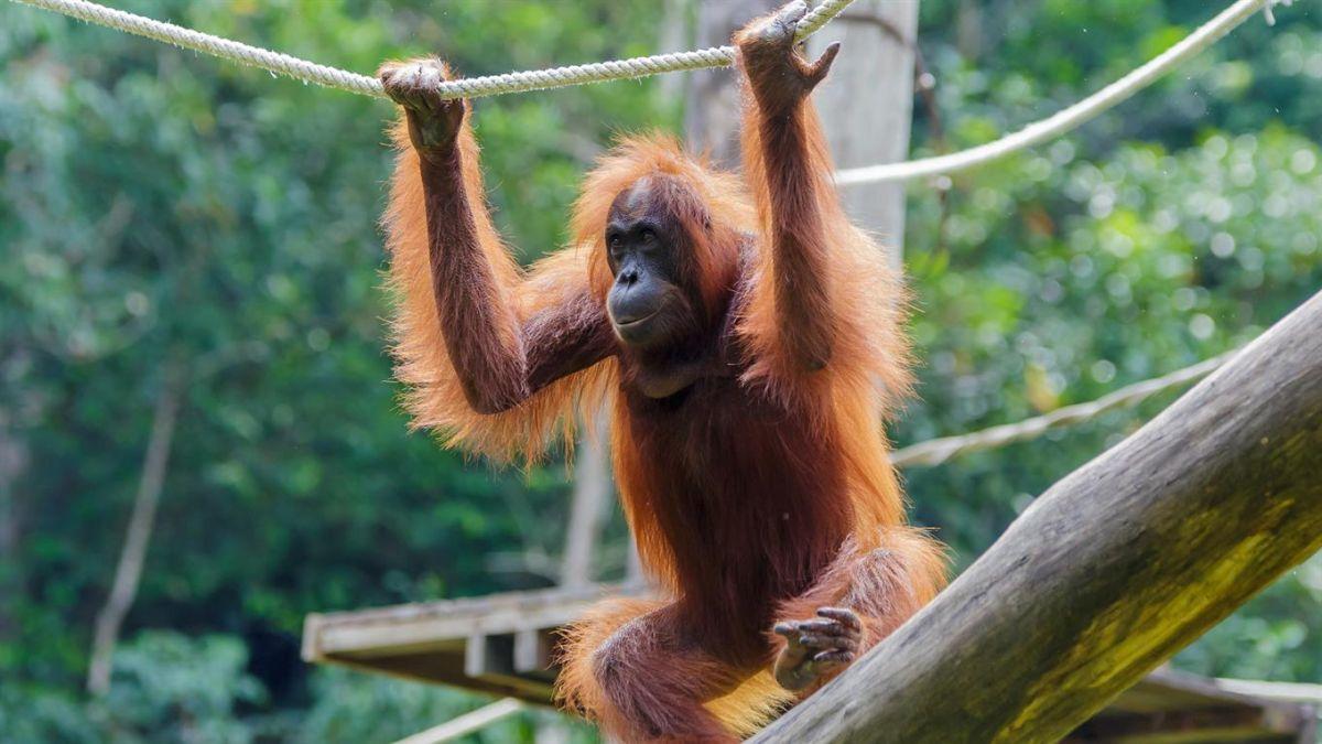 Los animales que son más inteligentes que los humanos