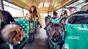 Llega el evento del año para perros, solo en NYC