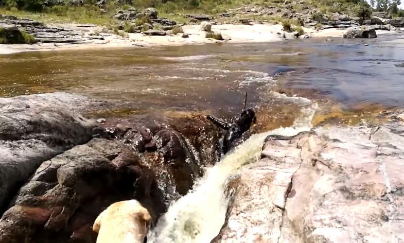 Video: Un perro es arrastrado por un río, pero la reacción de su compañero te va a encantar