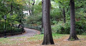 Encuentran cadáver colgado de un árbol en Central Park de Nueva York
