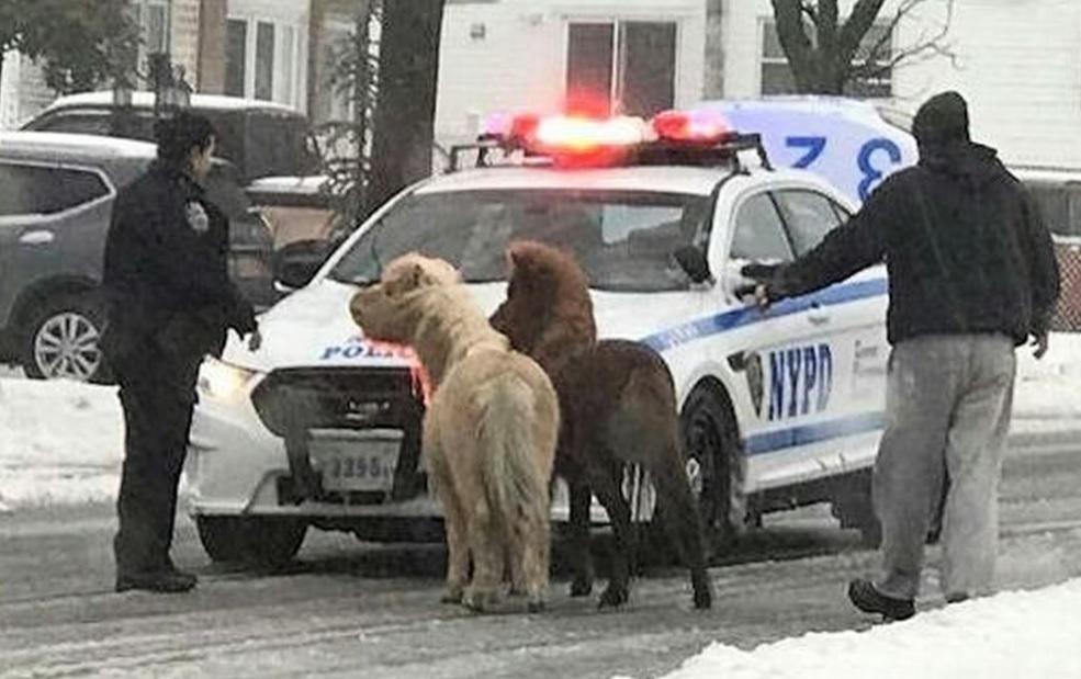 Los dos animales fueron vistos vagando en medio de la tormenta Stella