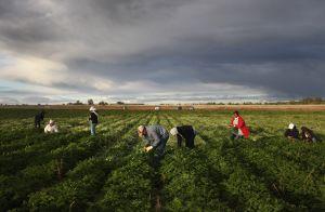 "Desata temor avance de ley contra ""santuarios"" para inmigrantes en Kentucky"