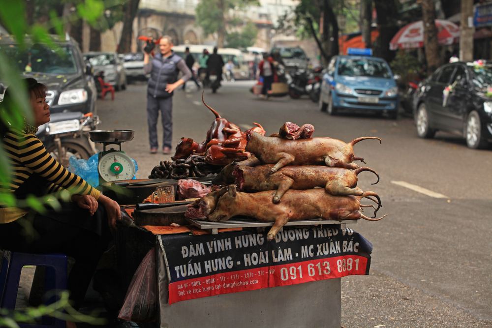 Taiwán prohibe comer carne de perro y gato