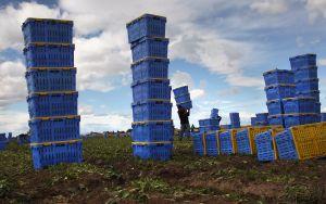 USCIS alerta de nuevo sistema para trabajadores agrícolas con visa H-2A