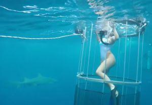 Tiburón ataca a estrella porno mientras grababa en Miami