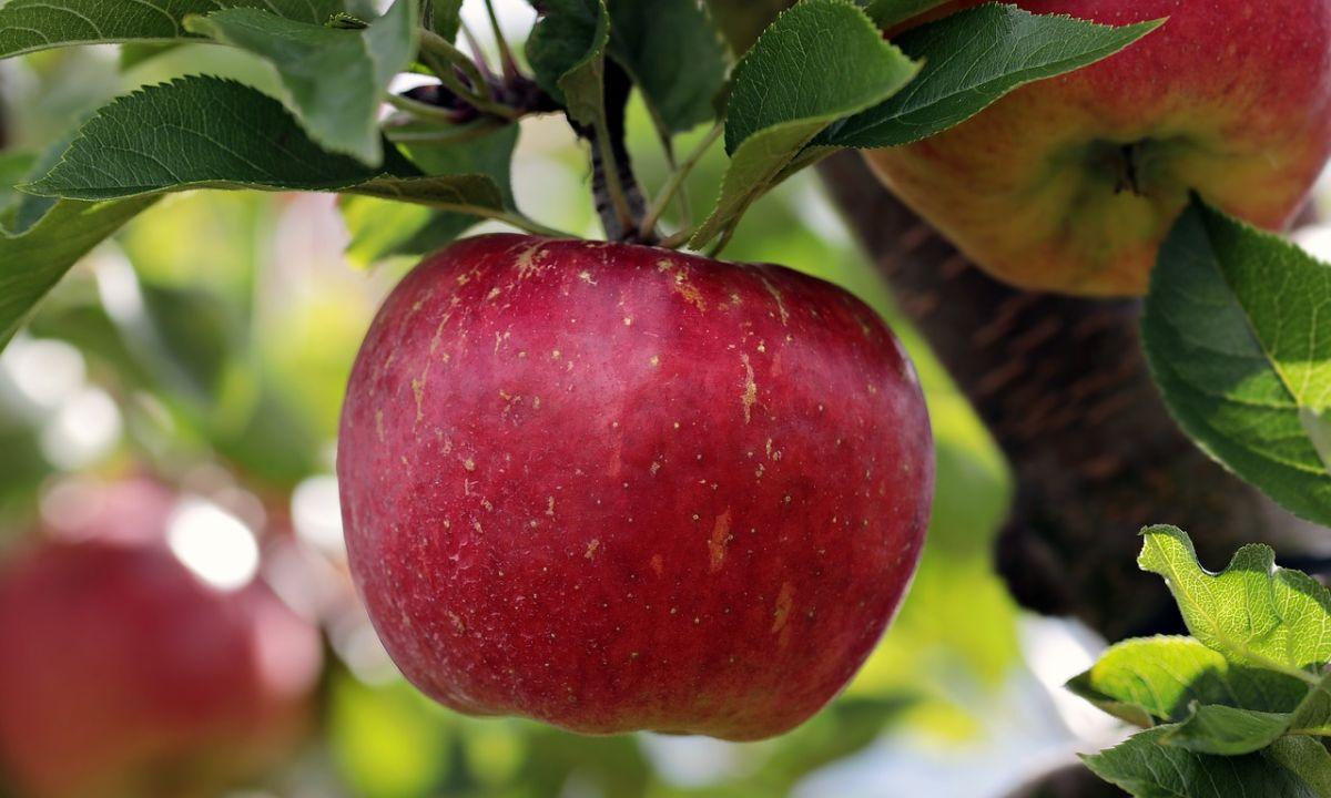 Una fruta tan común puede estar llena de pesticidas.