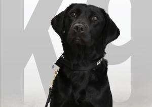 Esta es la vida de un perro despedido por la CIA