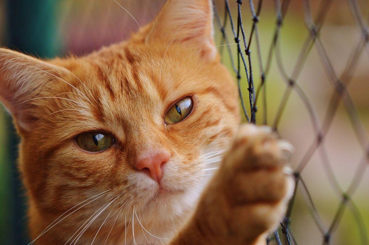 La suerte de los gatos en Nueva York depende de una firma del gobernador Cuomo