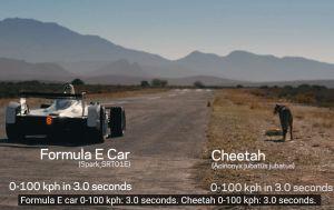Video: ¿Quién gana: Cheeta o Fórmula E?