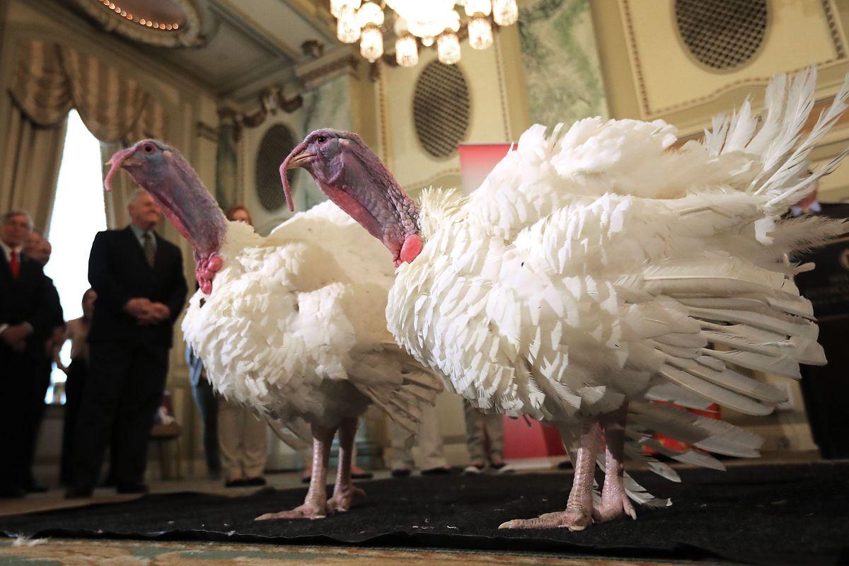 """Los pavos para la ceremonia del """"perdón"""" en la Casa Blanca se hospedan en lujoso hotel"""