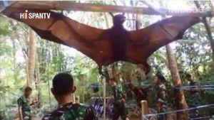 Aparece murciélago gigante en Filipinas