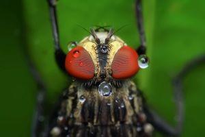 Esto convierte a una mosca en un verdadero peligro