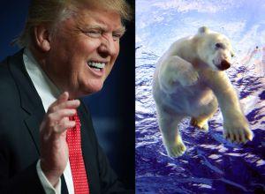 Peligro: reforma fiscal de Trump permitirá perforaciones petroleras en el 'corazón' del ártico de EEUU