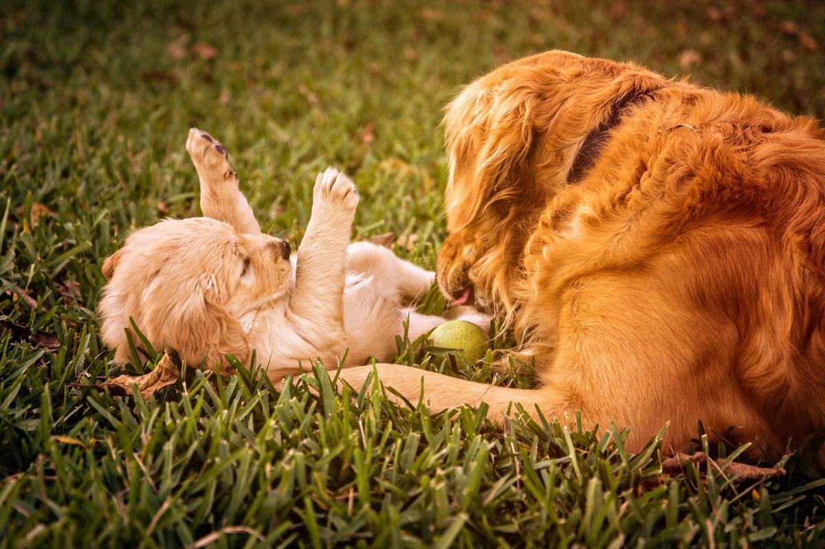 Video: Perro recibe un 'hermanito' de Navidad y así reaccionó