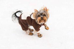 Tu mascota también pasa frío