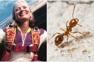 La paracaidista que le debe la vida a más de 250,000 hormigas de fuego