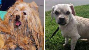 Reportan a perro como muerto pero lo encuentran vivo y en el peor de los estados