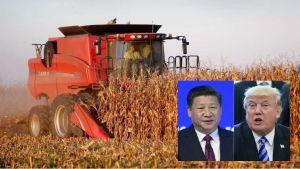 Los 5 sectores más afectados por la guerra comercial desatada con China
