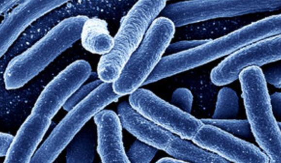 """Puertorriqueño víctima de bacteria """"come carne"""" en Nueva Jersey"""