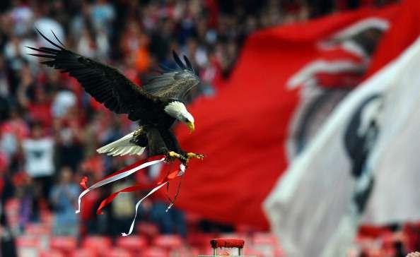 VIDEO: Águila mascota del Benfica escapa del estadio antes de un partido