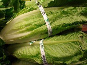 California reporta la 1.ª muerte por el brote de E. coli de lechuga romana