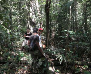 NASA capta datos secretos de la Amazonía con nueva tecnología