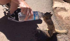 Video: Turista del Gran Cañón le dan de beber agua embotellada a ardilla y se hace viral