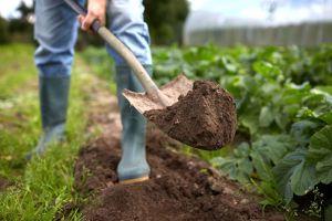 Foto: Trabajaba en el jardín de su casa cuando descubrió el cadáver del ex de su esposa