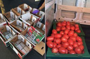 Descubren tráfico millonario de heroína escondida entre tomates de Chicago a NY