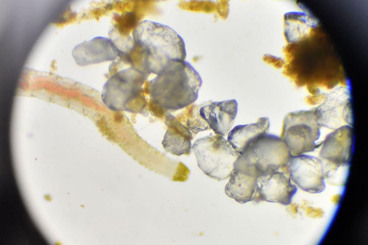 Reviven a gusanos congelados de la época de los mamuts