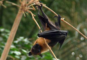 """Rodrigo Medellín, el """"Batman"""" de México y su batalla por proteger a los murciélagos"""