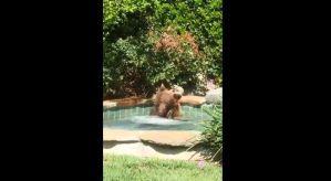Video: El divertido momento en el que un oso se divierte dentro de un jacuzzi