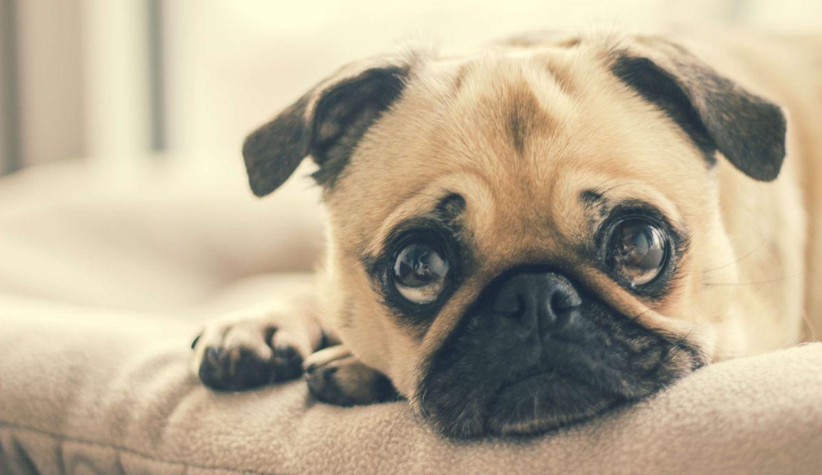 Famosas protestan contra el consumo de perros en Corea del Sur